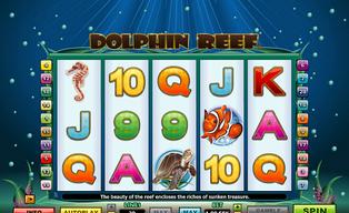 Dolphin reef20140825 31054 1boto6j