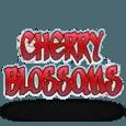 Cherry blossom20140825 31054 zq46bf