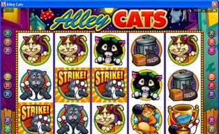 Alley 20cats 20scatter20140429 16648 6repjo